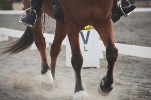 Horse Arena Construction & Kits